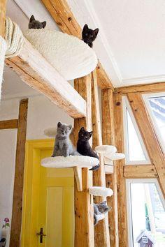 Домики для кошек: все тонкости правильного выбора  Смотри больше http://kot-pes.com/domiki-dlya-koshek-vse-tonkosti-pravilnogo-vybora/