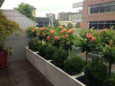 balkon sichtschutz ideen beton küebeln kleine bäume buchs