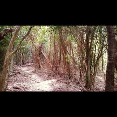 Rainforest walk on Daydream Island