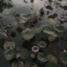 Dark Green Aesthetic, Nature Aesthetic, Forest Fairy, Pretty Pictures, Aesthetic Pictures, Aesthetic Wallpapers, Instagram, Fairy Wallpaper, Disney Wallpaper