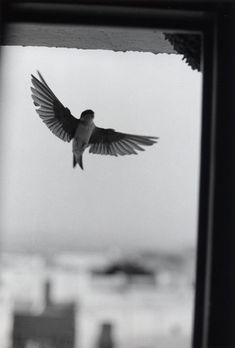 Photo by Bernard Plossu. Love Birds, Beautiful Birds, Les Fables, French Photographers, Black And White Pictures, Belle Photo, Birds In Flight, Black And White Photography, Beautiful Creatures