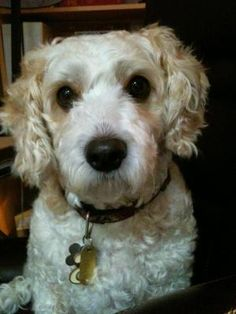 Fairfax, Virginia Dog Boarding & Pet Sitting | DogVacay