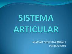 Sistema Articular (Anatomia Veterinária)