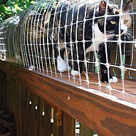 DIY outdoor cat-enclosure