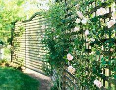 Pagar rumah akan lebih indah jika dihias dengan berbagai tanaman merambat dan berbunga.