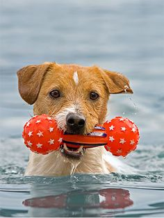 Swimming safety for dogs.