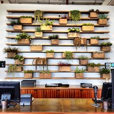 wooden planter wall