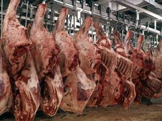 Sides of Beef Hanging in a Meat Locker Photographic Print by H. Armstrong Roberts - AllPosters.ca`MINOTAUR