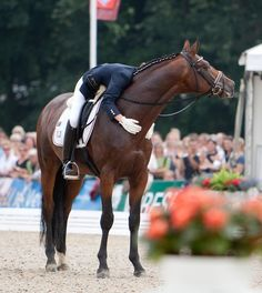 I have noticed, without fail, these dressage and hunter/jumper riders praise their mounts after a performance. All The Pretty Horses, Beautiful Horses, Animals Beautiful, Simply Beautiful, Horse Photos, Horse Pictures, Horse Love, Horse Girl, Dressage Horses