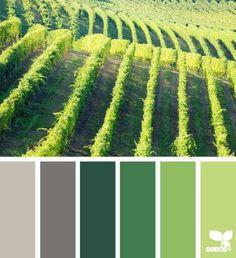 Kleurinspiratie groene wijngaard