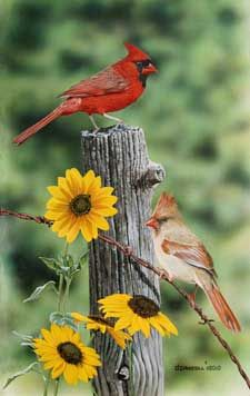 Cardinals and Black eyed Susans acrylic painting by Wildlife Artist Danny… Pretty Birds, Love Birds, Beautiful Birds, Cardinal Birds, Black Eyed Susan, Bird Pictures, Pics Art, Bird Prints, Beautiful Creatures