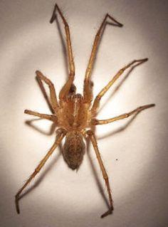 Ms De 1000 Ideas Sobre Identifying Bug Bites En Pinterest Picaduras Insectos