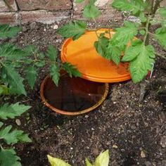 Clay Pot Irrigation_Want to conserve water but still want to make sure you aren't under-watering your garden? Want to establish a simple greenhouse irrigation system? Clay pot irrigation can save of water without depriving your plants. Garden Irrigation, Permaculture, Garden, Permaculture Magazine, Simple Greenhouse, Clay Pot Irrigation, Lawn And Garden, Clay Pots, Irrigation