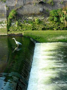 heron in the lee