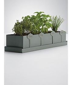 kitchen herb planter by RedEnvelope. $39.25. A dash of basil and a pinch of parsley; every meal is better with herbs. And no herb is better than the one picked right from your very own garden. Whether they're a seasoned chef or just like to exercise their green thumb, this kit of parsley, chives, basil and thyme brings freshness to the table.