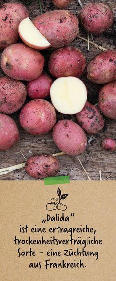 Bio Art, Potatoes, Vegetables, Roasts, Meat, Cooking, Asparagus, France, The Fruit