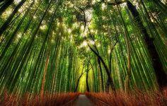 El Bosque de Bambú de Sagano es uno de los espacios naturales más espirituales de nuestro planeta. Ubicado a las orillas del japonés monte Arashiyama, en la isla de Kioto, está considerado como como…