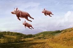 I love the way pigs look when they fly.  Ea O Ka Aina: Flying Pigs & Swine-flu Part 2