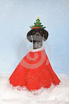 Photo about Dog dressed up as a christmas tree in the snow. Image of season, dogs, snow - 61577631 Dog Dresses, Dog Photos, Xmas Tree, Christmas Cards, Snow, Seasons, Stock Photos, Dogs, Image