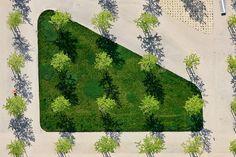 Urban trees.