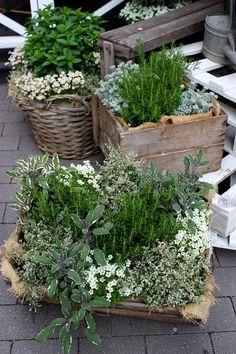 Inredningsbloggen : Piazzan Photo by Pernilla.N . Kryddväxter Herbs