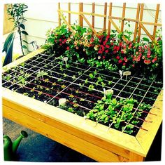raised garden bed organic salad table 2012, container gardening, diy, flowers, gardening, raised garden beds, An organic raised garden table planted by the square foot method using companion herbs and flowers and a little veggie bling