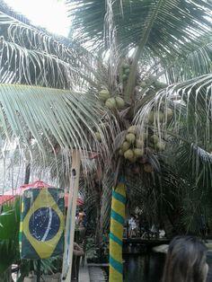 Meu olhar de torcedora,  sem filtro, sobre A COPA   Crocobeach Fortaleza - CE  Foto Sandra Dias
