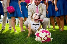 pictures of bulldogs in wedding outfits | Your dog in the seat of honour at your wedding. Sooo cute!