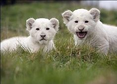 Beautiful Cute Baby Animals Photos