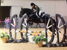 15.1 LIGHTWEIGHT COB All Rounder Horse for sale in Lincolnshire, East Midlands!