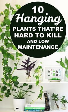 10 Hard to Kill Hanging Plants That'll Make Your Home Look Amazing Time for some hanging plants indoor DIY! Here are 10 hanging plants that are very hard to kill, low maintenance, and will make your home look expensive and full of life! Hanging Plants, Indoor Plants, Indoor Gardening, Hanging Gardens, Gardening Books, Air Plants, Cactus Plants, Gardening Tips, Diy Rustic Decor