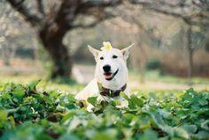 Gluta Thai 1,000 way dog.