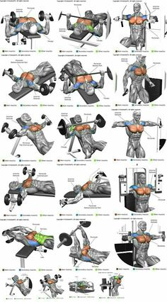 How To Get The Best Chest Workout is part of Chest workouts - Heavy compound exercises are known as one of the main exercises for gaining muscle mass and they should be included in your chest training There are a lot of opinions Chest Workout For Men, Chest Workout Routine, Gym Workout Tips, Weight Training Workouts, At Home Workouts, Body Training, Strength Training, Exercise For Chest, Chest And Shoulder Workout