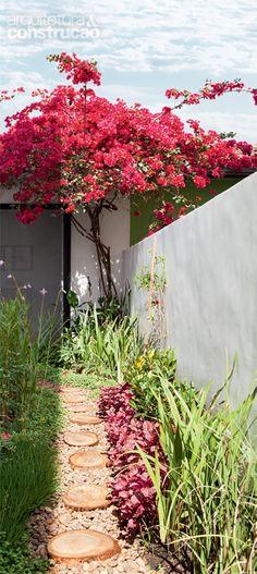 Bouganvilla pruning to tree shape - love that Bougainvillea Tree, Rusty Garden, 100 M2, Small Gardens, Small Vegetable Gardens, Native Plants, Landscape Architecture, Garden Inspiration, Garden Plants