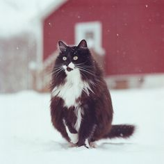 08d3f61a9410b As 38 melhores imagens em Felinos no Pinterest   Big cats, Wild ...