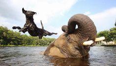 unusual-animal-friendships-28982-960x548