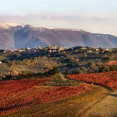 Montefalco's wine trail: An Umbrian adventure #winelovers #Umbria #Italy
