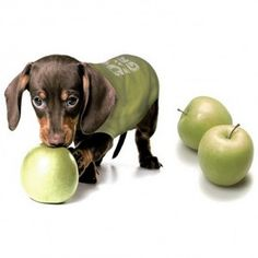 Des pommes et des chiens : recettes aux pommes et sorties aux pommes pour chien - Oven Baked