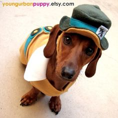 Dressed up weenie dog!
