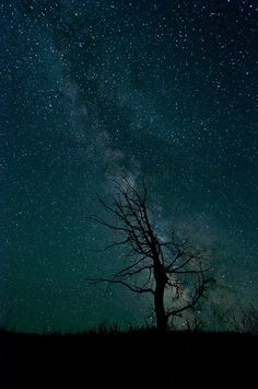 The starry night sky gives the picture a great effect. I like how the tree and the ground look sort of like shadows.