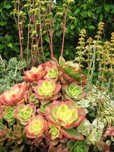 Self Realization Fellowship Meditation Garden in Encinitas, CA    photo: Cindy Davison from The Succulent Perch