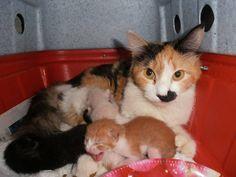 Essa linda gatinha foi abandonada com sua cria em Jacarepagua - RJ. Todos FELV +, infelizmente.