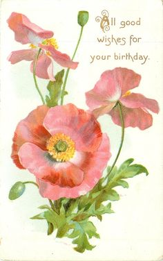"""Pink poppies ~ 1908  """"All good wishes for your birthday."""""""
