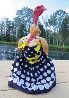 More and more backyard poultry owners are dressing up their flock in chicken clothes. Here are some fun ideas for Halloween costumes and Christmas time.