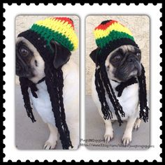 Rasta Hat-Hats for Dogs-Rasta Hat For Dogs-Pugs-Novelty Dog Hats-Silly Dog Hats-Crochet Dog Hats-jamaican dog hat-dreads-pugs-pugs in hats- by PugsNGiggles on Etsy https://www.etsy.com/listing/180076861/rasta-hat-hats-for-dogs-rasta-hat-for