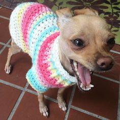 My lovely model Kira is cheering for Tessa a #rescuedog #chihuahua saved by #furreverfamilyanimalrescue . I hope this #handmade #crochet sweater brings her good luck finding the best home! #chihuahuasofinstagram #adoptdontshop #crochetersofinstagram #crochetconcupiscence #handmadeisbetter #dogsofinstagram by seasquirt_studios