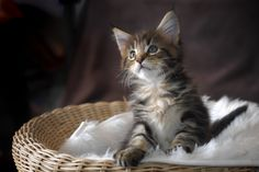 Photo Aware kitten by Dominique Legros on 500px