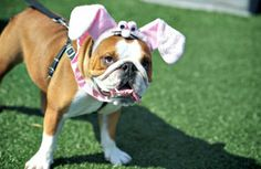 How to Protect Your Pet This Easter