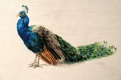 Google Image Result for http://www.deborahsimon.net/images/watercolors/peacock.jpg