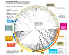 We are one. ... All 2.3 Million Species Are Mapped into a Single Circle of Life - Scientific American